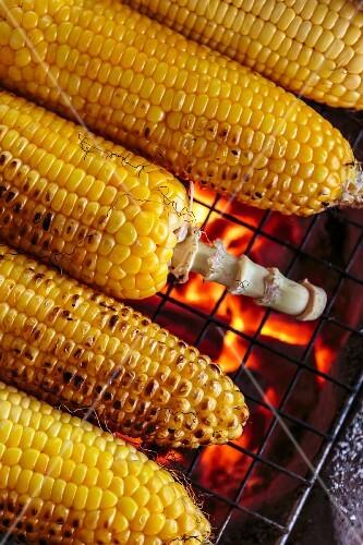 Grilled corn cobs (Vientiane, Laos)