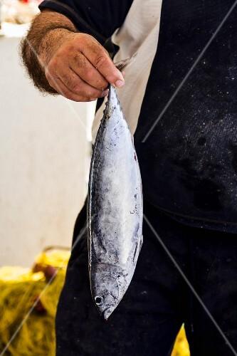 A man holding a freshly caught mackerel