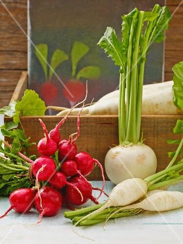 Fresh radishes and horseradish