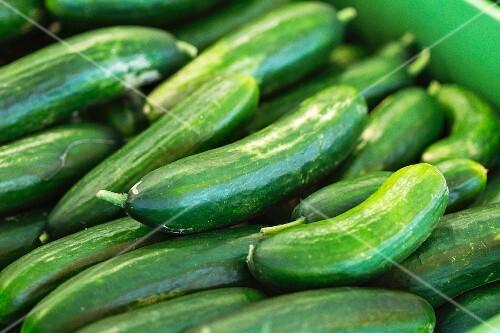 Cucumbers in a pot