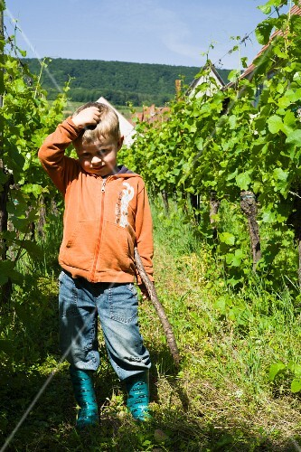 Ludovic, the son of the organic winegrower between vines in a garden, Pfaffenheim, Domaine Pierre Frick, Alsace
