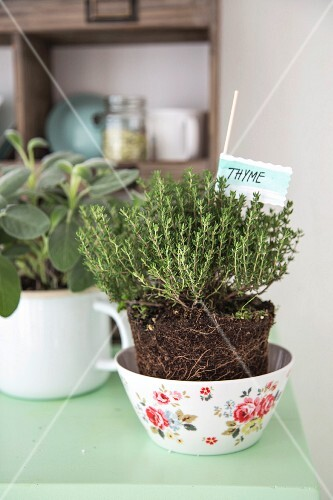 Thyme and sage in a decorative bowl and an enamel mug on a kitchen dresser