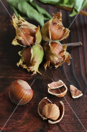 Freshly picked hazelnuts with husks on a brown wooden board, one nut cracked