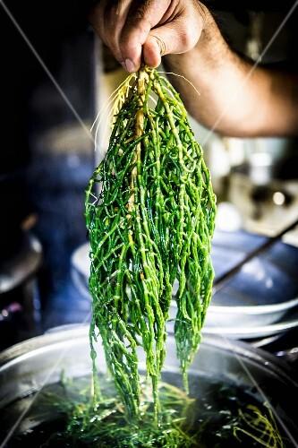 Cooked Turkish glasswort lettuce