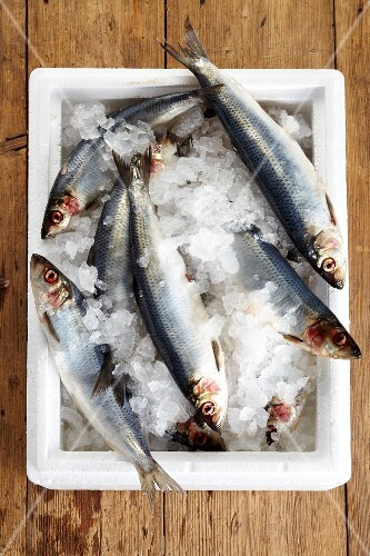 Fresh herring in an ice bucket (seen from above)