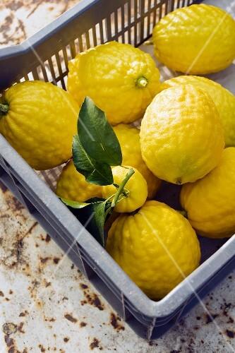 Lemons in a crate