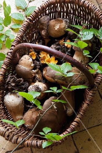 Fresh wild mushrooms in a wicker basket