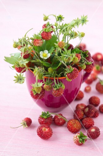Wild strawberries with flowers in a bowl