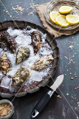 Frische Austern auf Eis, Austernmesser und Zitronenscheiben