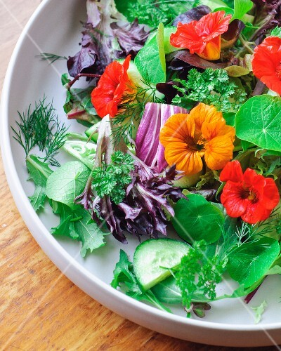 A mixed leaf salad with cucumber, herbs and nasturtium flowers