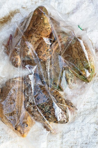 Frogs in bags for sale, Thailand