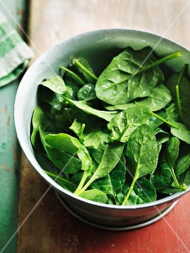 Frisch gewaschener Spinat im Küchensieb