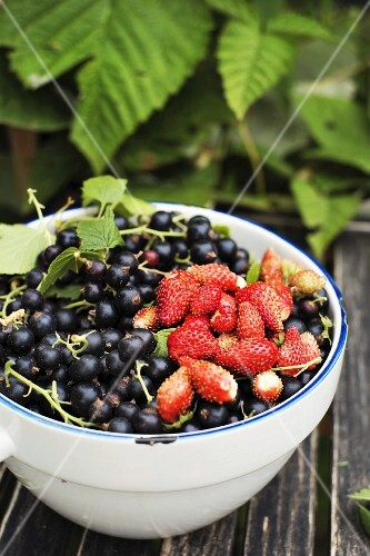 Blackcurrants and wild strawberries in a bowl on a wooden table