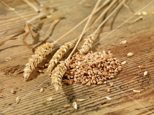 Wheat seeds and ears of wheat on a wooden surface
