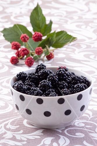 Blackberries in a polka-dot bowl