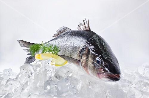 A fresh catfish on ice