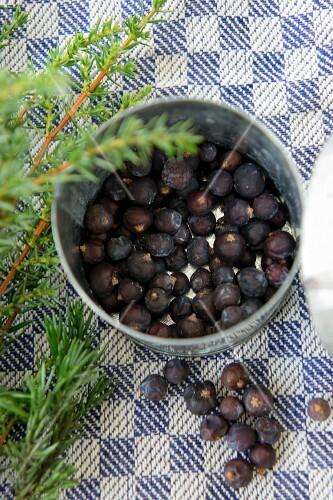 Juniper berries and a juniper sprig