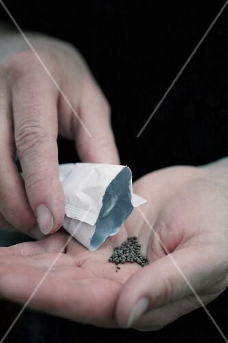 Seeds on a hand
