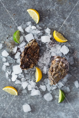 Fresh, raw oysters with ice cubes and slices of lemon and lime