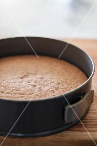 Freshly baked cake in a springform tin