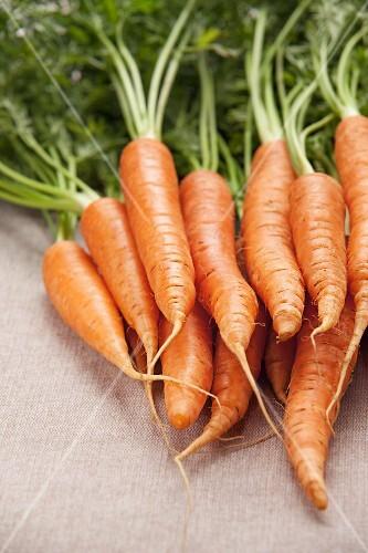 Fresh carrots on a light tablecloth
