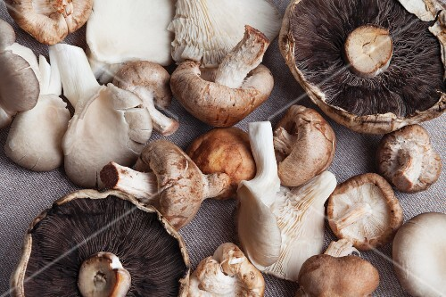 Various mushrooms on a linen table cloth