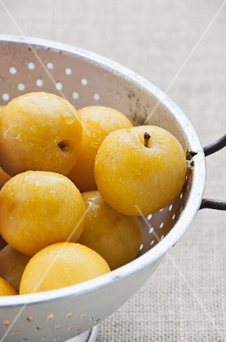 Yellow plums in a colander