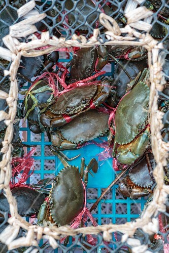 Live crabs in a basket at a market (Nong Khai, Thailand)