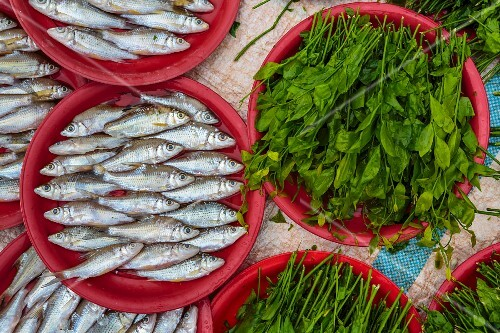 Fresh water fish and herbs at a market (Vientiane, Laos)