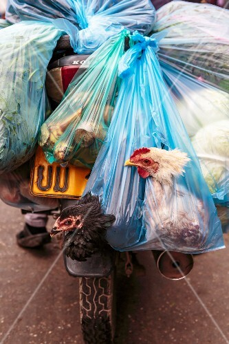 Live chickens and vegetables in plastic bags on a motorbike (Vientiane, Laos)
