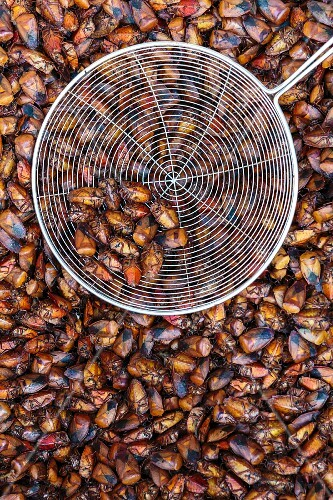 Edible insects at a market (Vientiane, Laos)
