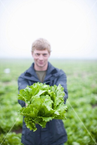 A young man in a field holding out an organic head of lettuce