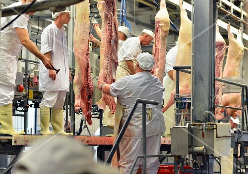 Butchers working in a slaughterhouse, Germany