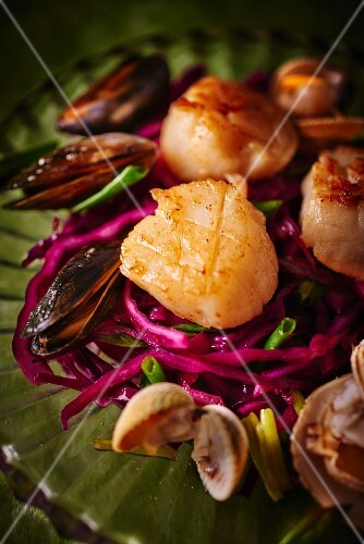 Scallops on a red cabbage salad