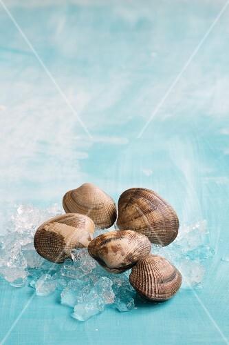Fresh clams on ice