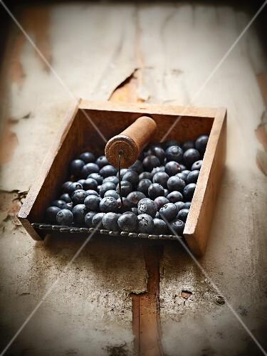 Freshly harvested blueberries