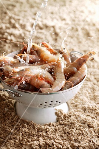King prawns in a colander with a stream of water