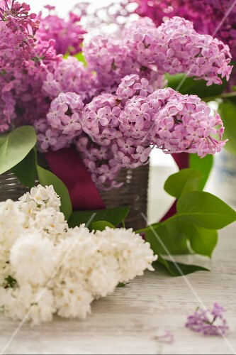Pink and white lilac flowers in a basket