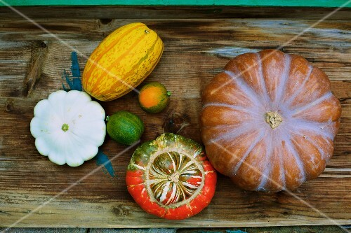 Various types of squash (seen from above)