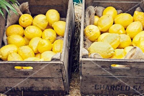 Fresh lemons in wooden crates