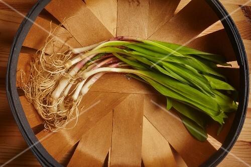 Fresh wild leeks in a wooden basket
