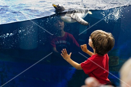 A little boy looking at penguins at Sea Life in Constance on Lake Constance
