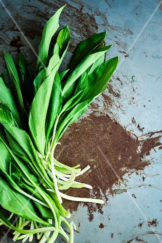 Fresh ramsons (wild garlic) leaves
