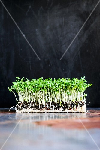 Cress against a black background