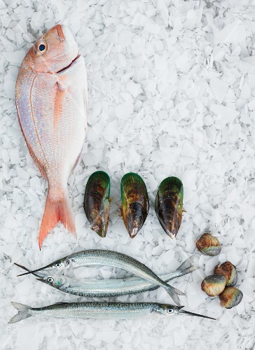 An arrangement of fish and mussels on ice