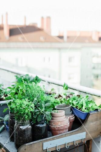 Fresh herbs in mason jars on potting bench on roof terrace