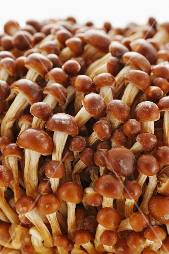 Golden enoki mushrooms (close-up)