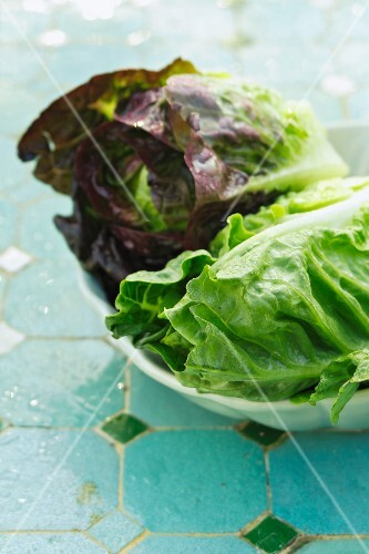 Lettuces in a bowl