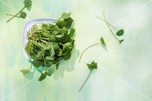 Purslane on a plate and on a green surface