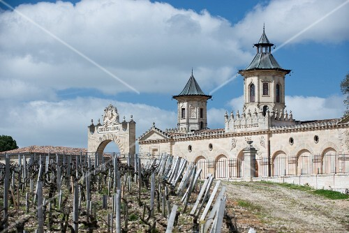 Vines in spring before shooting at Chateau Cos d Estournel (Bordeaux, France)